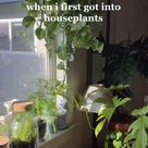 Tips For House Plants