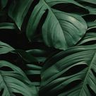 Download wallpaper 800x1420 leaves, plant, green, dark, vegetation iphone se/5s/5c/5 for parallax hd background