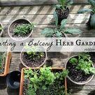 Balcony Herb Gardens