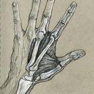 Hand Study, Final, Anatomy