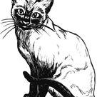 Gato Para Colorear, Pintar E Imprimir