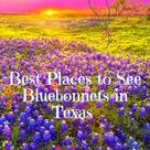 Best Places to See Bluebonnets in Texas