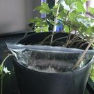 Cheap, Easy, Leak-Safe Way to Water Plants While on Vacation