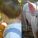 Johnson's Corner Farm, Medford NJ. Farm, Farm Market, Bakery, CSA, Pick Your Own