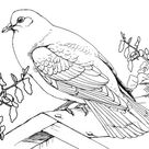 Bird Archives - Page 3 of 4 - Best Coloring Pages For Kids