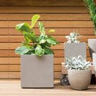Seven best pot plants for your garden and home