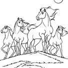 Horses Printable Coloring Page For Kids - Four magnificent horses