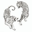 Download premium psd / image of Hand drawn roaring tiger illustrations on an off white background about tiger, art, sketch, hand drawn, and animal drawing 2364984