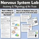 Nervous System Activity - Use Your Brain! Article and Stations