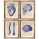 Human Anatomy Print, Set of 4 Prints, Human Skull Decor Dictionary Art Print, Brain Artwork, Heart P