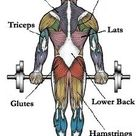 Map of Muscles - Pick Exercises for Different Muscle Groups