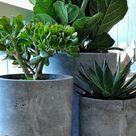 Zimmergrünpflanzen Bilder und inspirierende Deko Ideen