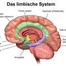 Dysautonomie – wenn das vegetative Nervensystem aus dem Gleichgewicht gerät