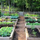 Hochbeet selber bauen und bepflanzen   Vorteile, Materialien und Tipps