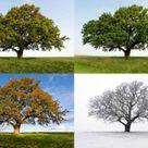 Warum gibt es vier Jahreszeiten?