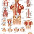 Medizinisches Poster