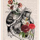 Wall decor Anatomical Art Poster  Set of 3   Flower Anatomy | Etsy