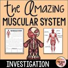 Muscles of the Human Body - Muscular System Activities