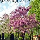 Fastest Growing Trees