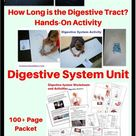 Human Body Activities - Digestive System - Homeschool Den