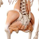 Lower Back and Hip Pain - how are they connected?