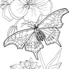 Butterfly Stands On A Plant coloring page | Free Printable Coloring Pages