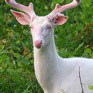 Albino Tiere: Hast du schon einmal eine weiße Vogelspinne gesehen?