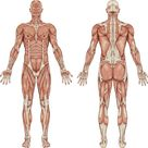 Do You Know What Your Core Really Is and What it Does