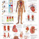 Sport-Tec Bluthochdruck Poster Anatomie 70x50 cm medizinische Lehrmittel