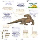 My All About Komodo Dragons Book / Workbook - (Desert Animal / Warm climate)