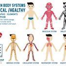 Human Body Systems Annual Checkup Anatomy Body Organ Chart