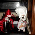 Dog Halloween