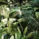 Ferns on Hokitika Gorge, The South Island, New Zealand