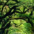 Tree Tunnel in Around The World 🍃