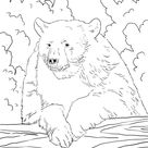 American Black Bear Portrait coloring page | Free Printable Coloring Pages