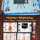 Human Anatomy | Human Organs | Internal Organs