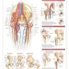 Anatomy and Injuries of the Head and Neck Laminated Anatomical Chart