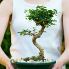 Koi Garden  | Bonsai Trees | Koi Fish Pinterest Account