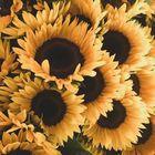 Maria Tomjuk Pinterest Account