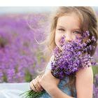 Dream Field Studio | lavender eye pillows | herbal dream pillows Pinterest Account