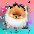 Aurora instagram Account