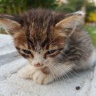 Arda Alpdo Pinterest Account