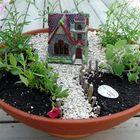 Mini Garden Pinterest Account
