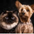 Pet Friends's Pinterest Account Avatar