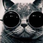 Dokuz Kuyruklu Kedi Pinterest Account