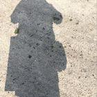 Sarah Williams Pinterest Account