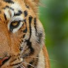 Big Cats India instagram Account