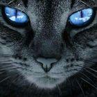 Kavrox's Pinterest Account Avatar
