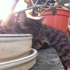Rosi die Katze instagram Account