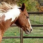 HorseCrazyIowa Pinterest Account